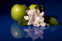 Apples & Blossom. Green apples along with the apple blossom reflected in blue plexy glass Royalty Free Stock Photography