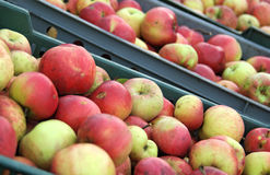 Apples in the box crate. On the market Royalty Free Stock Image