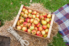 Apples in box Stock Photography