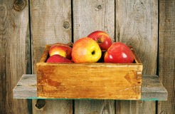 Apples in a box Stock Photography