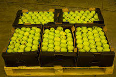 Apples in boxes Royalty Free Stock Image