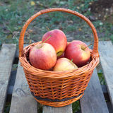 Apples in brown wicker basket Stock Photo