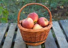 Apples in brown wicker basket Royalty Free Stock Images