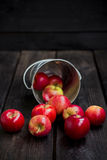 Apples and bucket. The apples which are pour out from a metal bucket Stock Photo