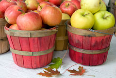 Apples in bushel baskets. Variety of Michigan apples in red bushel baskets with fall leaves royalty free stock image