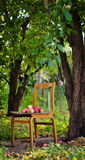 The apples are on the chair. Ripe delicious apples lie on the old chair in the garden Royalty Free Stock Image