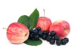 Apples and chokeberry Royalty Free Stock Images