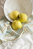 Apples in a colander on a striped towel. Three yellow fresh apples  in white colander on a striped towel, rustic style Royalty Free Stock Image