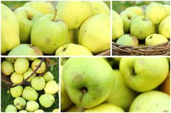 Apples collage Royalty Free Stock Image