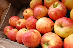 Apples collection on the market. A collection of apples in a box Royalty Free Stock Photography