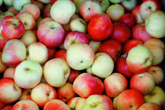 Apples. Colorful apples in green yellow and pink colors Stock Photography