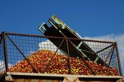 Apples conveyor belt 5 Stock Photos