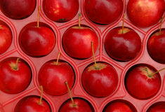 Apples In The Crate. Closeup apples packed in the crate for transportation Royalty Free Stock Photography