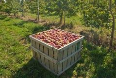 apples crate Στοκ Εικόνες