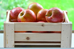 Apples in a crate. Delicious Gala apples in wooden crate on windowsill with vibrant green background Royalty Free Stock Image