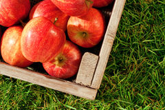 Apples in a crate on grass. Still life photo of freshly picked red apples in a wooden crate on grass Stock Photo