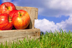 Apples in a crate on grass with blue cloudy sky. Still life photo of freshly picked red apples in a wooden crate on grass against a blue cloudy sky Royalty Free Stock Photos