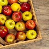 apples crate organic Εκλεκτική εστίαση Στοκ φωτογραφίες με δικαίωμα ελεύθερης χρήσης