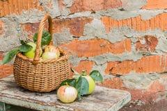 apples crate organic 新鲜本质上 免版税库存照片