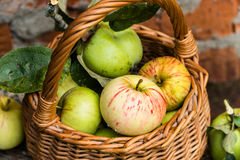 apples crate organic 新鲜本质上 免版税库存图片
