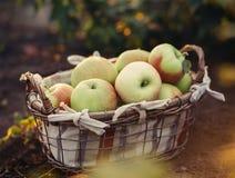 apples crate organic Στοκ Εικόνα