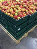 Apples in Crates Stock Photography