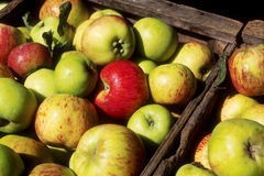Apples in Crates Royalty Free Stock Image