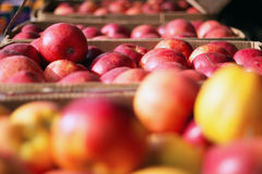 Apples in crates on market Stock Images