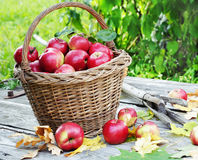 Apples day Stock Image
