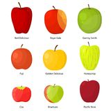 Apples Different Varieties with a Description Set. Vector Stock Images