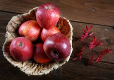 Apples and dry branch in a  basket Stock Image