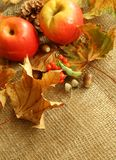 Apples and dry leafs on sacking. Stock Photos