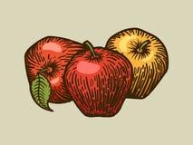 Apples engraving style vector illustration vector illustration