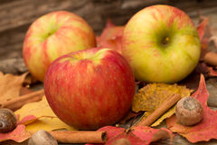 Apples and Fall Leaves. In Autumn Stock Image