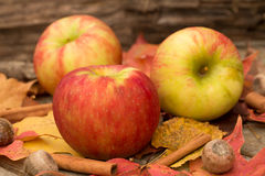 Apples and Fall Leaves. In Autumn Stock Images