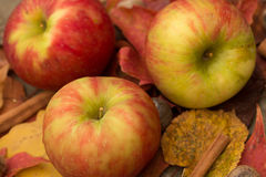 Apples and Fall Leaves. In Autumn from above Royalty Free Stock Images