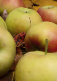 Apples on the fallen leaves. Autumn Royalty Free Stock Photo