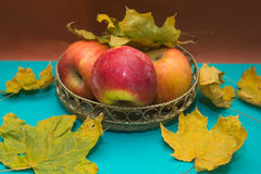 Apples among the fallen leaves Royalty Free Stock Photography