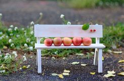 Apples Family. On the Bench Royalty Free Stock Photography