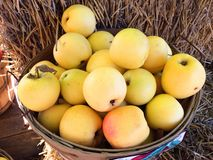 Apples on Farm in Basket at Fruitstand Royalty Free Stock Photos