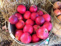 Apples on Farm in Basket at Fruitstand Stock Photography
