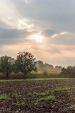 Apples farm Stock Photos