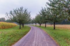 Apples farm Stock Image