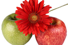 Apples and flower. Two apples and flower, are photographed on a white background Stock Images