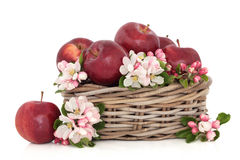 Apples and Flower Blossom Royalty Free Stock Image