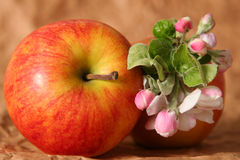 Apples and flowers Royalty Free Stock Image