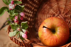 Apples and flowers Stock Photography