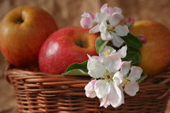 Apples and flowers Royalty Free Stock Photo