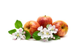 Apples and flowers isolated on white background Stock Photography