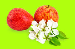 apples flowers red 图库摄影